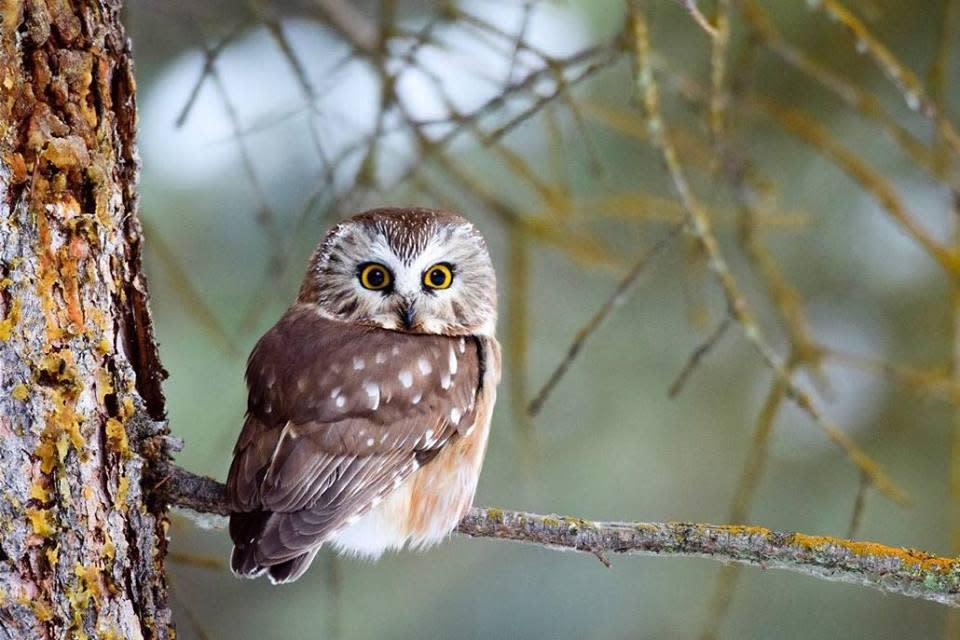 January Owl Prowl
