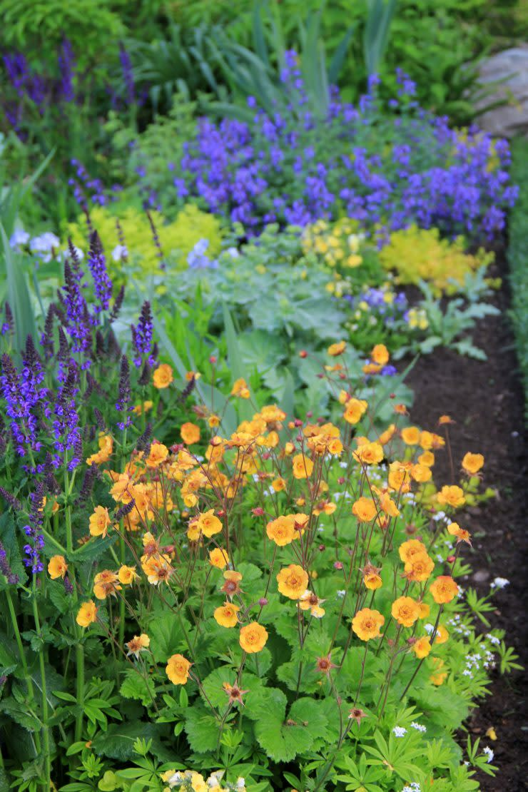 Foundations in Gardening: Color Theory for Gardens