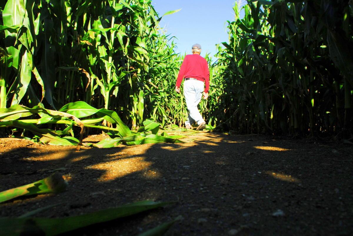 2018 Corn Maze