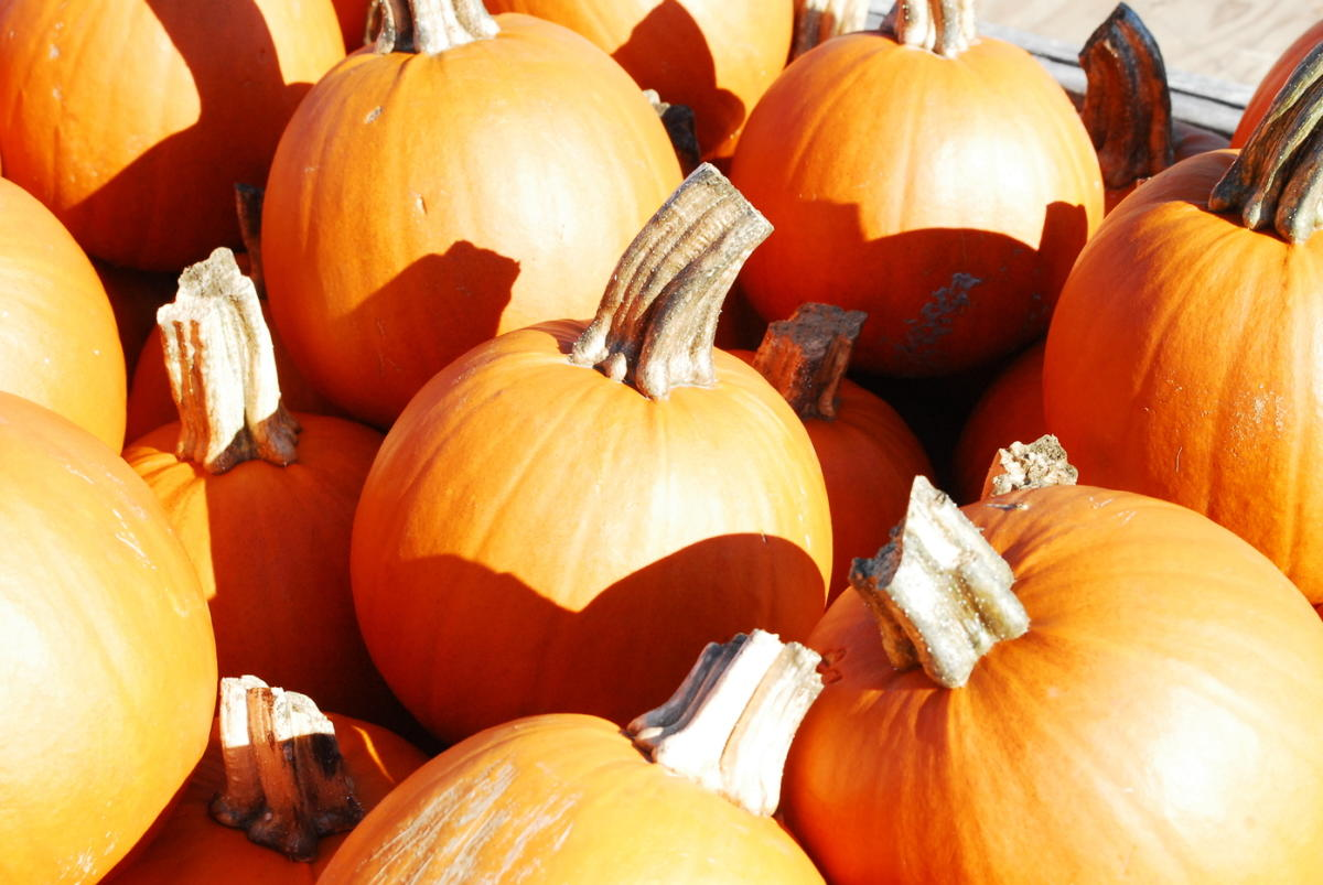 22nd Annual Pumpkin Festival
