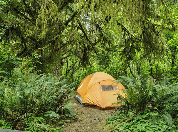 Camping On The Redwood Coast