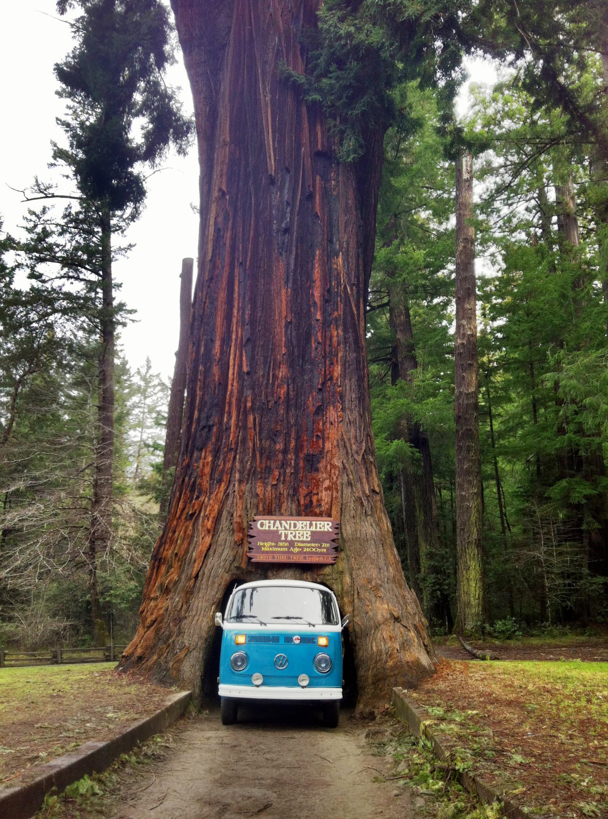 Drive Through A Redwood