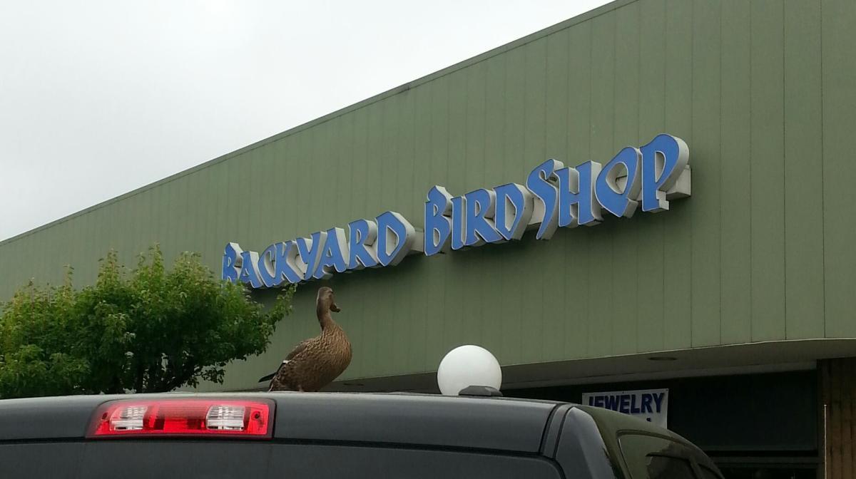 Backyard Bird Shop. 2; 2
