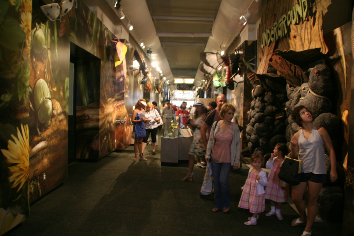 Audubon Butterfly Garden & Insectarium