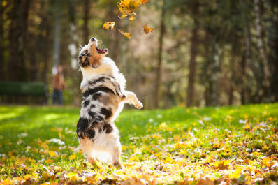 NewAlbanyDogPark.leaves.jpg