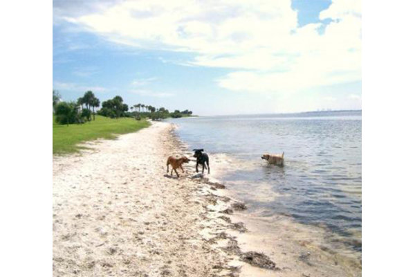 Picnic Island Dog Beach