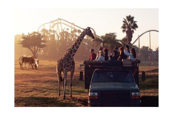 Serengeti Morning