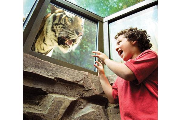 Boy Meets Lion