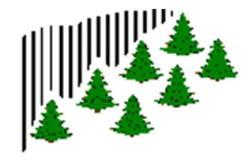 northern lights christmas tree farm - Northern Lights Christmas Tree Farm