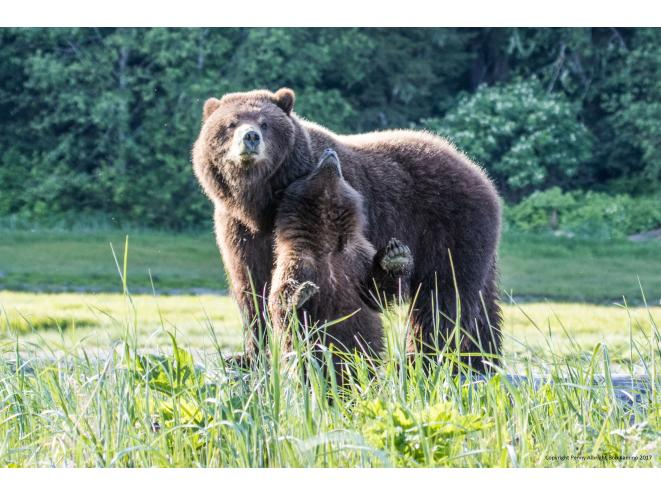 Sow with cub_Pack Creek Tours