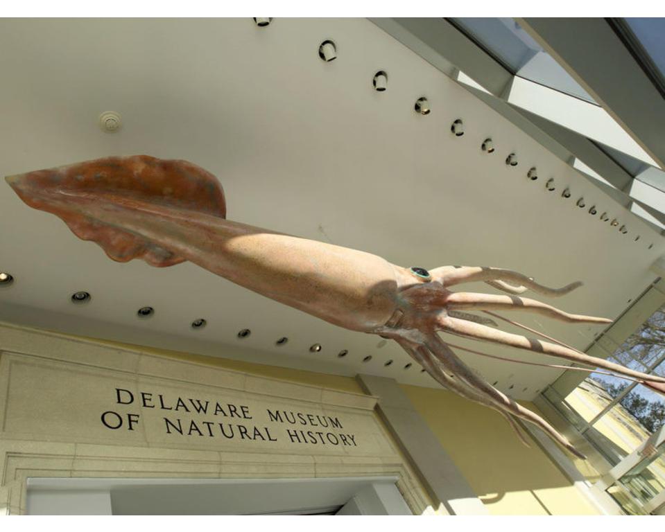 Delaware Museum of Natural History