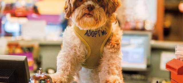 Pet Friendly Asheville Nc S Official Travel Site