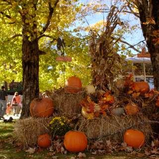 Halloween in Asheville