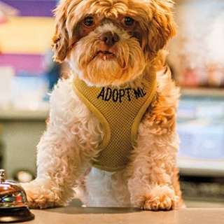 Copy of Asheville Hotel Matches Guests with Dogs