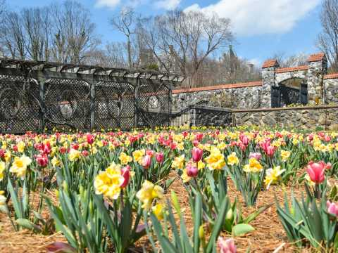 Things to do in spring 2018 asheville north carolina asheville biltmore blooms mightylinksfo