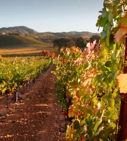 sonoma valley travel resource for sonoma valley wine country and