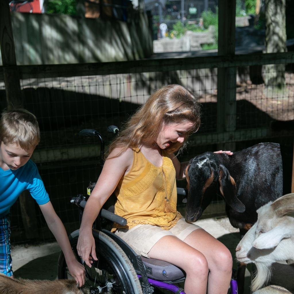 Petting the farm animals at John Ball Zoo in Grand Rapids