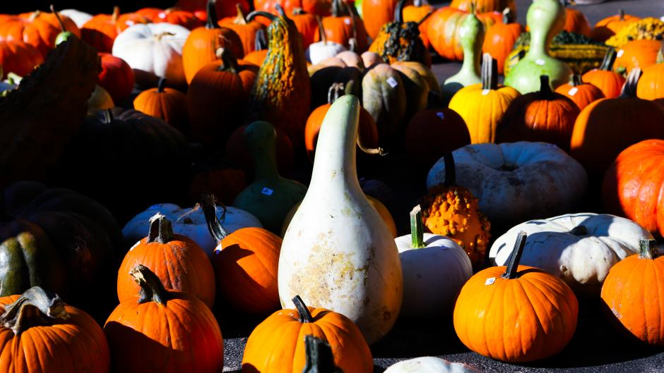 Pumpkins and Gourds at Grand Rapids Farmers Market