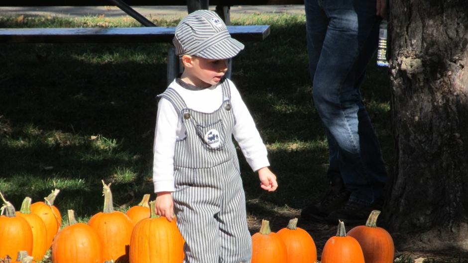 Pick up a pumpkin from one of the dozen u-pick farms in the Grand Rapids-area!