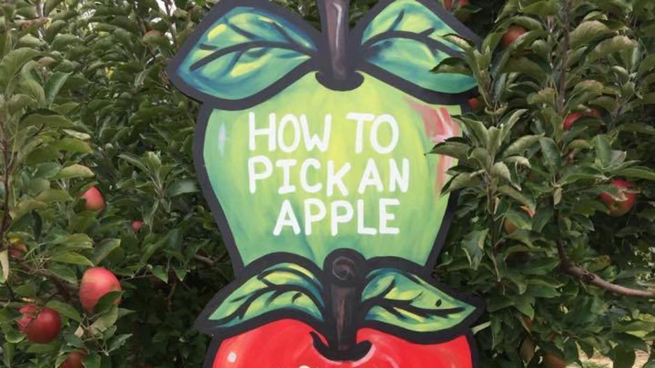Moelker Orchards