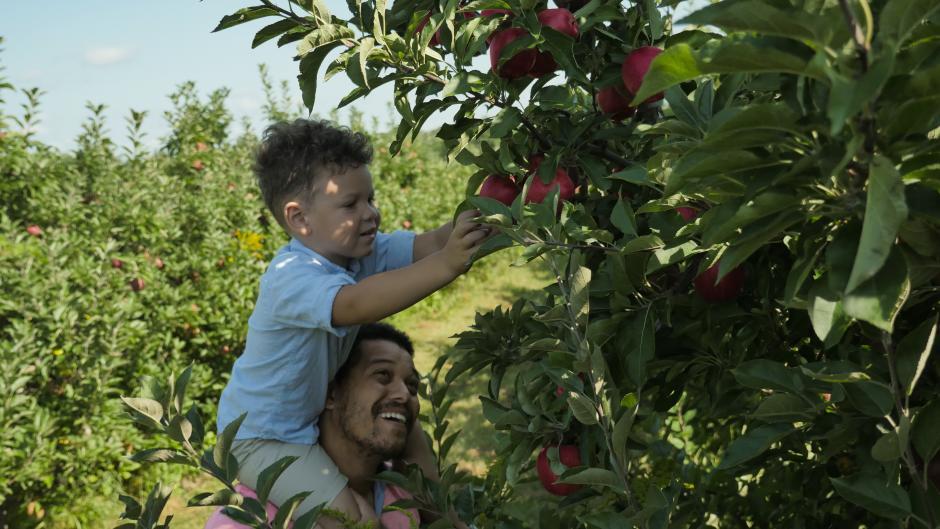 Apple picking at Bloks Orchard