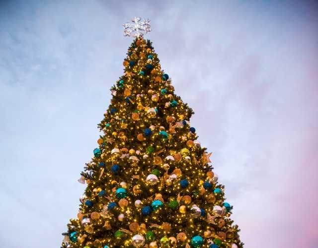 beach home for the holidays in panama city beach festivities - Beach Christmas Tree