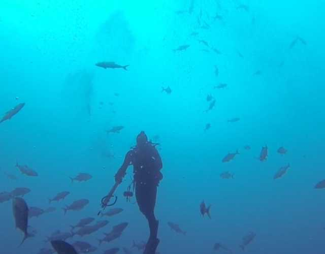 Featured Dive In To Panama City Beach