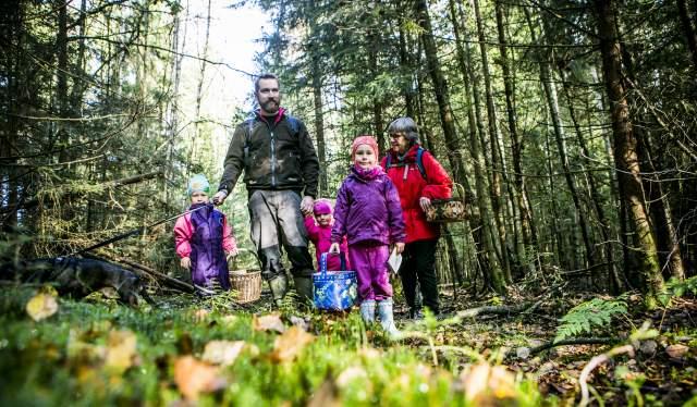 En familie er ute og plukker sopp i skogen i Moss på Østlandet