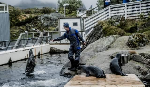 Rolf Malnes mater selene på Lofoten Adventure i Henningsvær