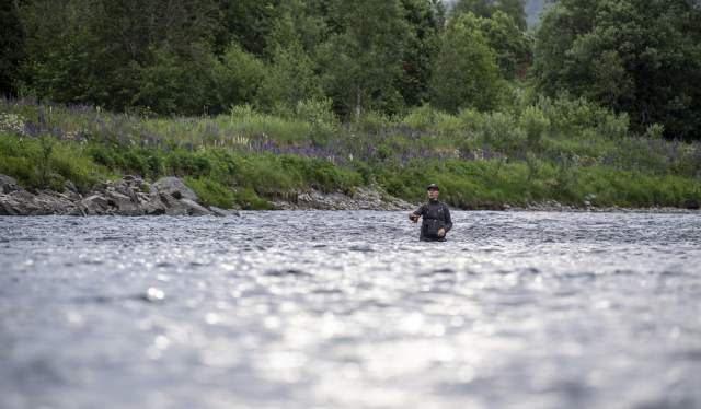 A fisherman fishing for salmon in the Stjørdalselva river in Trøndelag, Norway