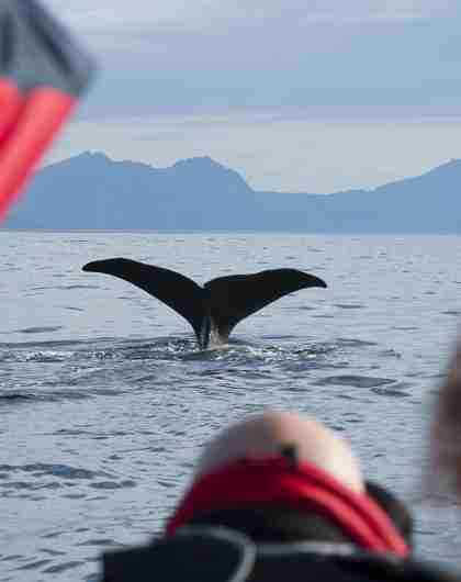 A group of people watching the tail of a whale from a boat in Vesterålen, Northern Norway