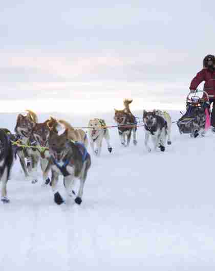 A person is riding a dog sledge during winter in Finnmark, Northern Norway