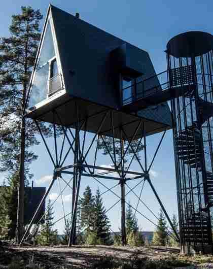 Pan tretopphytter i Åsnes på Østlandet