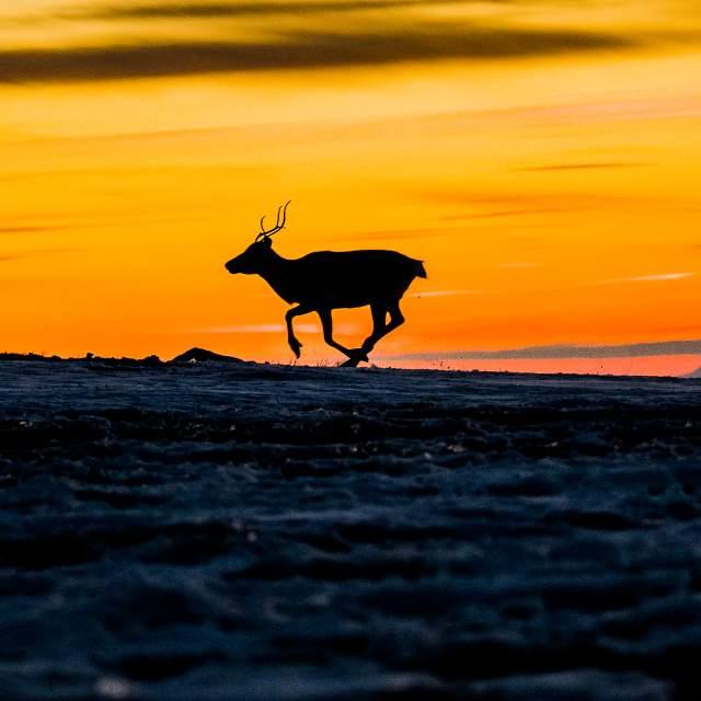 Finnmarksvidda, Finnmark
