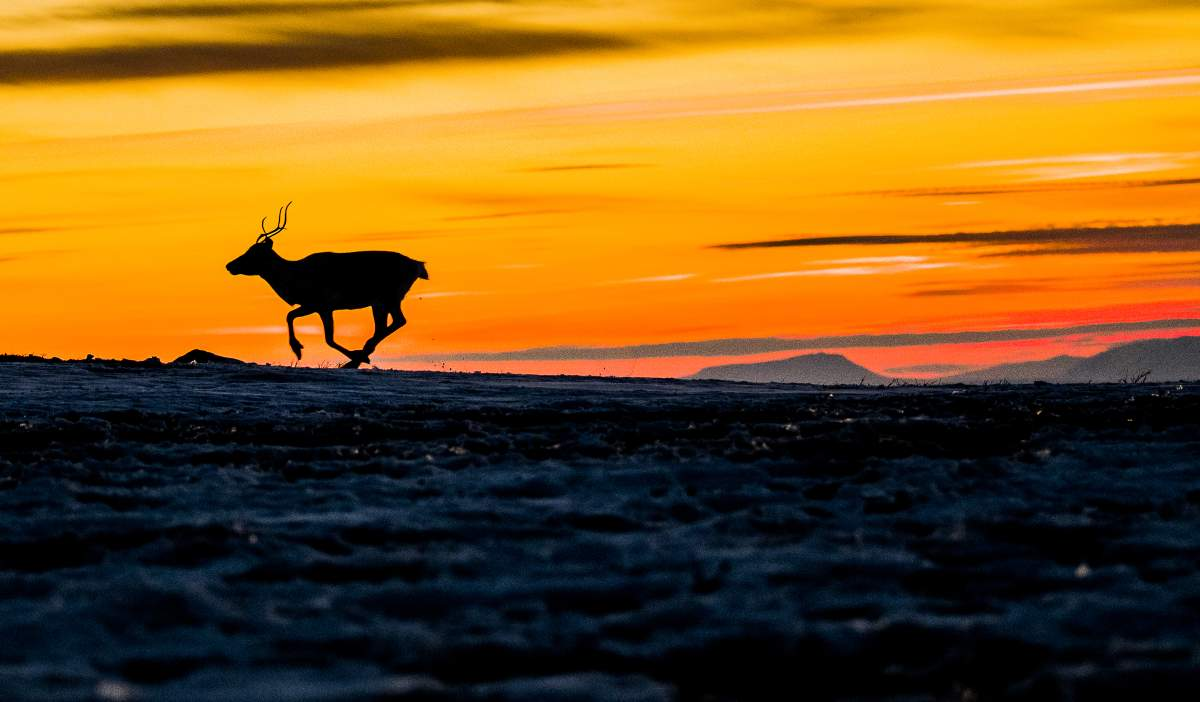 The best places to see the midnight sun in Norway