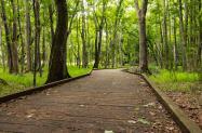 Carolina Beach State Park Trail