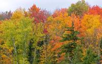 Trees in Autumn in Adirondacks