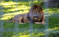Utica Zoo 516