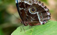 Joseph L. Popp, Jr Butterfly Conservatory 655