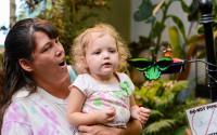 Joseph L. Popp, Jr Butterfly Conservatory 664
