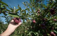 Riverview Orchards 753