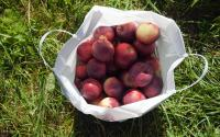 Riverview Orchards 754