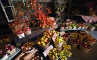 Hurd Orchard 1064