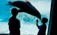 Buffalo Zoo 1094