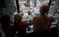 Buffalo Zoo 1100