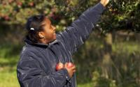 Slate Hill Orchard 1146