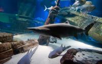 Atlantis Marine World Aquarium 1328