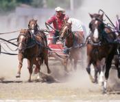 Wagon Races, Manitoba Stampede & Exhibition