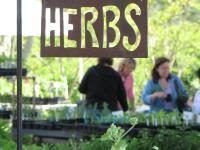 Herb Festival
