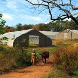 Coon Rock Farm